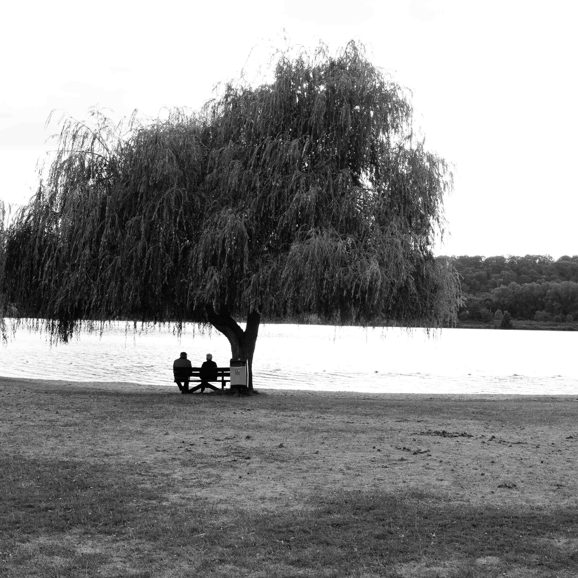 People sitting on a bench under a tree at a lake