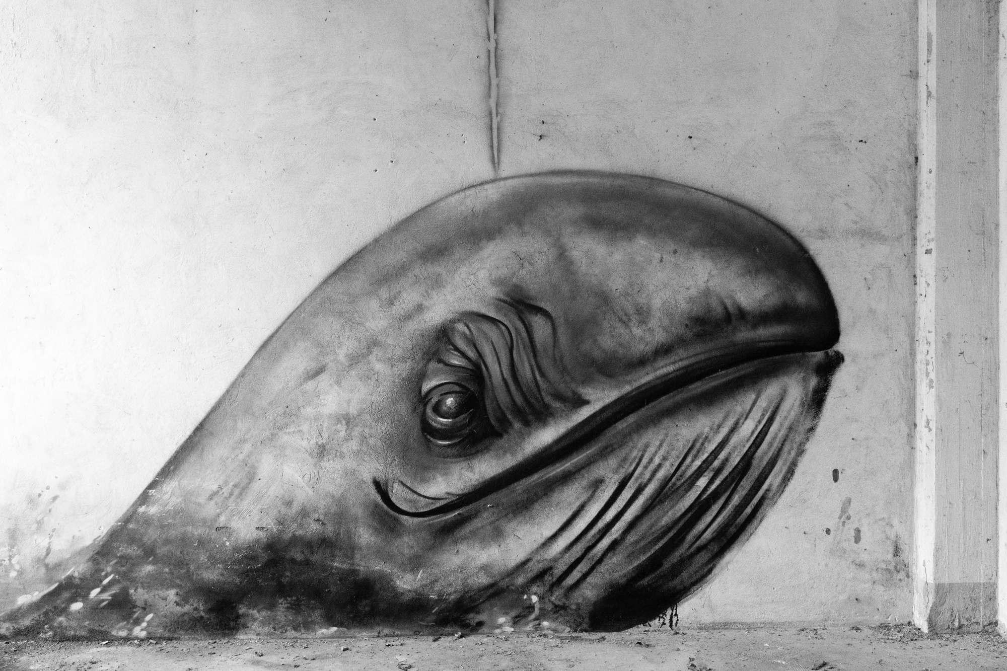 Graffiti of a whale